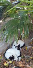 Duo de chats (Rhodes)