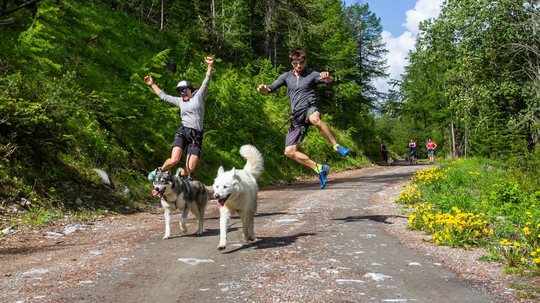 Cani-randonnée - Cani cross