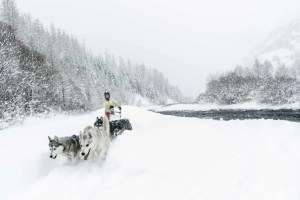 chien de traineau sous la neige