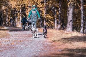 Cani-trottinette tout terrain 2 chiens