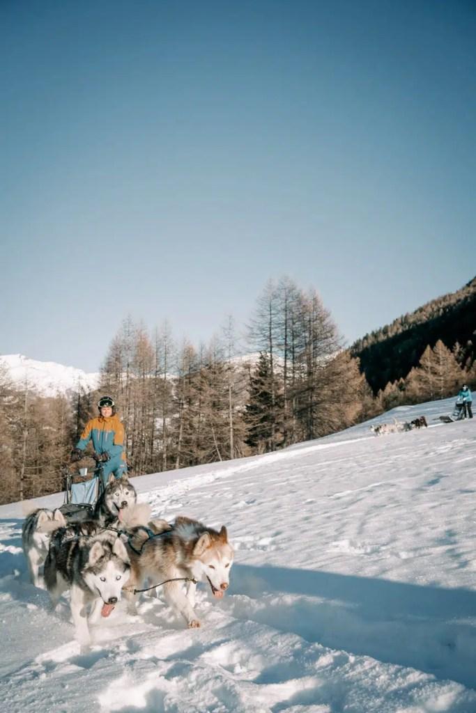 attelage chien de traineau et ciel bleu