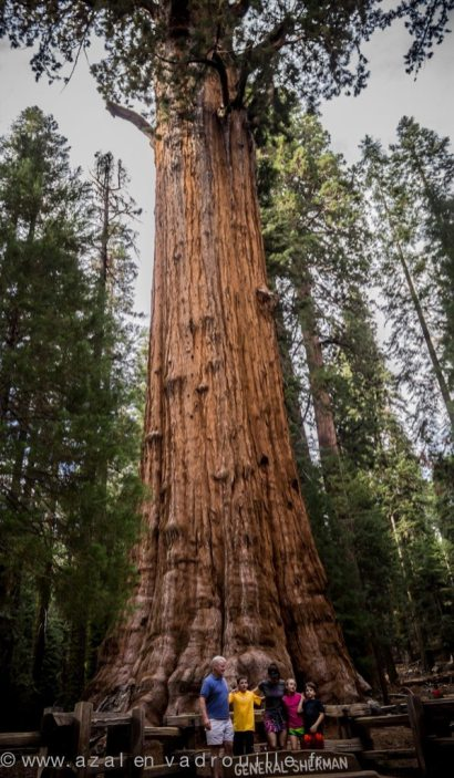 Sequoia National Park, California.