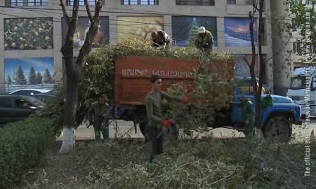 Կմշակվի ծառերի խնամքի մեկ ընդհանուր հայեցակարգ՝ ողջ Երևան քաղաքի համար