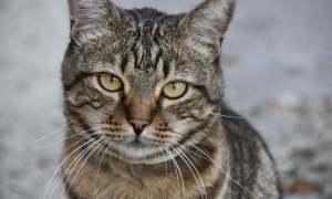 Էջմիածնում կատվին այրել են և նետել փողոց