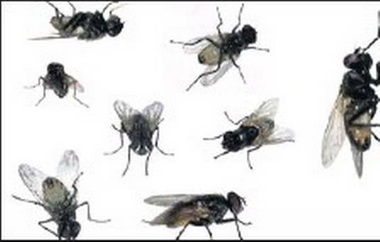 Fly infestation public meeting: no apologies just contempt