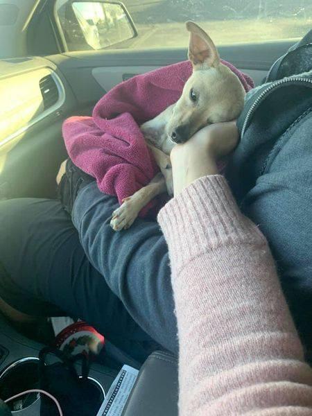 Noelle -Adoption Pending