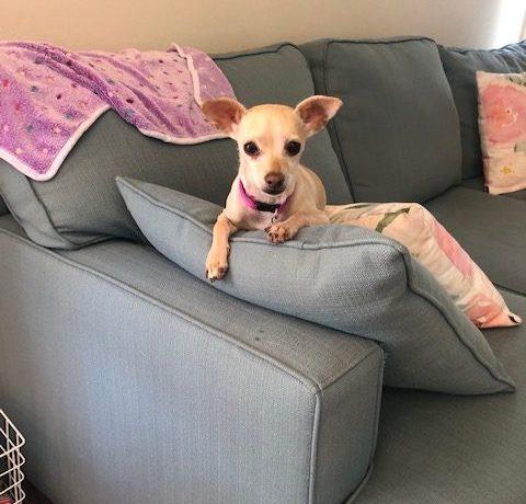 Terri – Adoption Pending