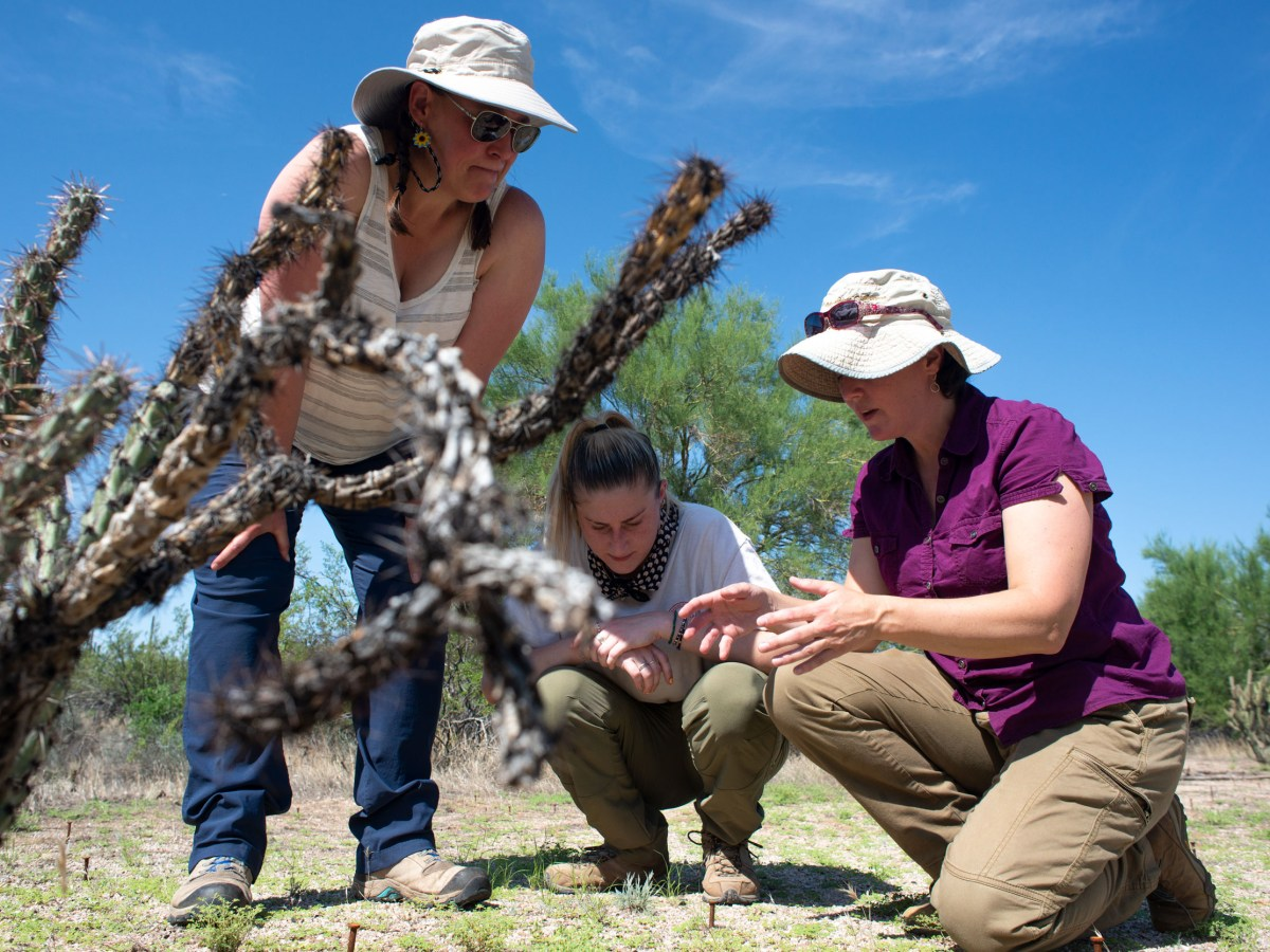 From left, Bridget Barker, an associate professor in the department of biological sciences at Northern Arizona University, Marieke Ramsey, a graduate student at NAU, and Anita Antoninka, an assistant research professor in the school of forestry at NAU, review biocrust soil experiments in the McDowell Sonoran Preserve in Scottsdale, Arizona on Aug. 6, 2021. Photo by Brandon Quester   AZCIR