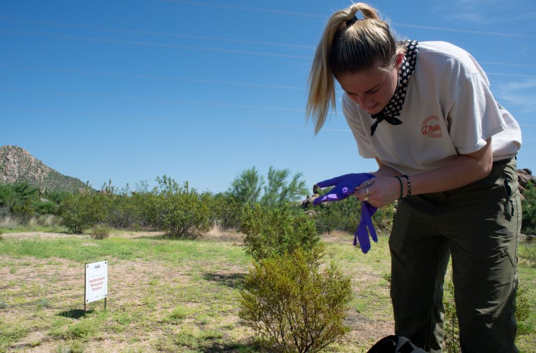Northern Arizona University graduate student Marieke Ramsey collects soil samples on Aug. 6, 2021, in the McDowell Sonoran Preserve in Scottsdale, Arizona. Ramsey is studying the ecology of Valley fever, a deadly fungus endemic to ArizonaPhoto by Brandon Quester   AZCIR