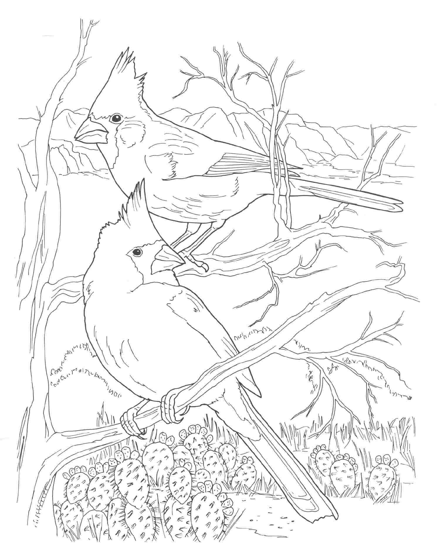 Arizona Cardinals Coloring Pages Sketch Coloring Page