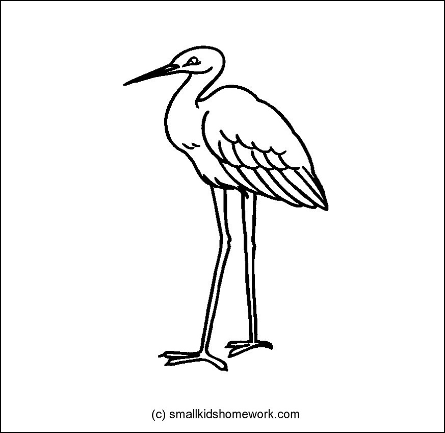 Crane Bird Outline And Coloring Picture With Interesting Facts