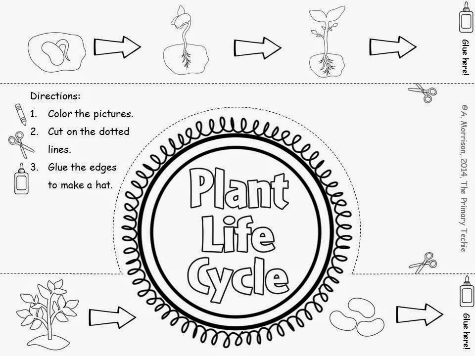 Plant Life Cycle Pages Coloring Pages