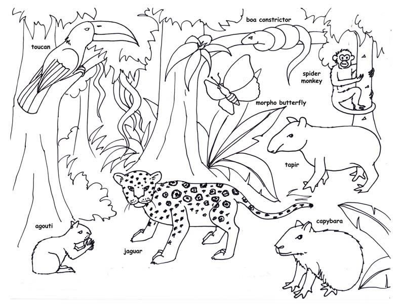 Amazon Rainforest Coloring Pages For Kids Sketch Coloring Page