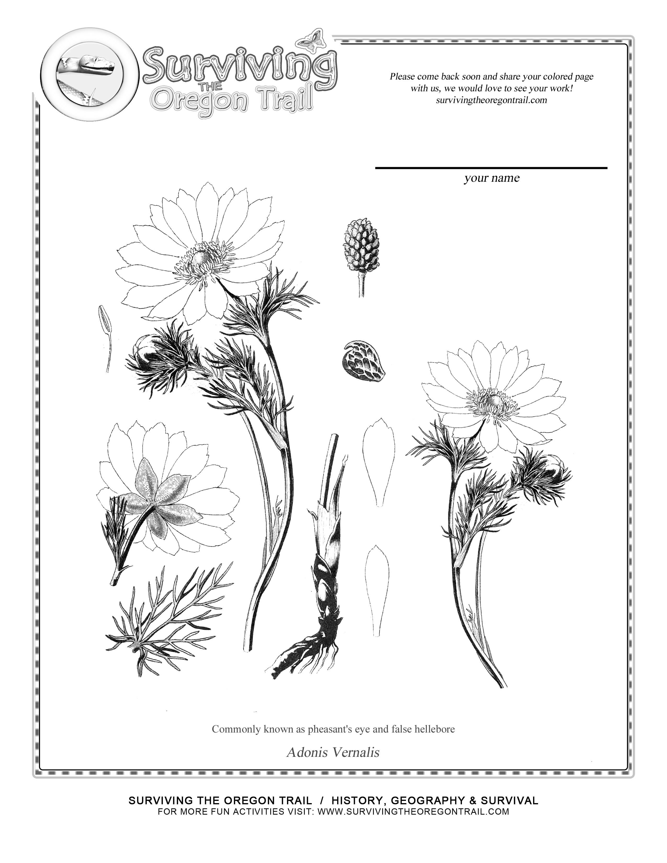 Botany Coloring Pages