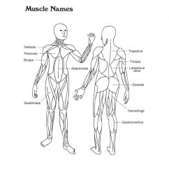 Skeleton Diagram For 4th Grade 2006 Mazda 6 Bose Radio Wiring Muscular System Coloring Pages - Home