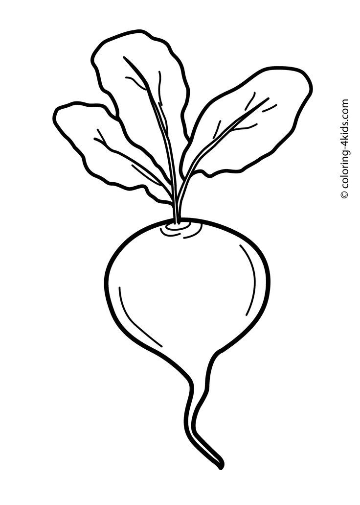 Preschool Beetroot Coloring Pages Home Sketch Coloring Page