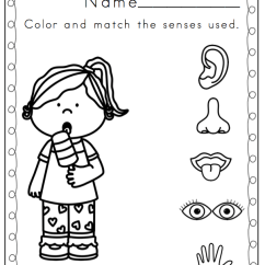 Nose And Smell Diagram 2002 Mitsubishi Pajero Wiring My Five Senses Coloring Pages - Home