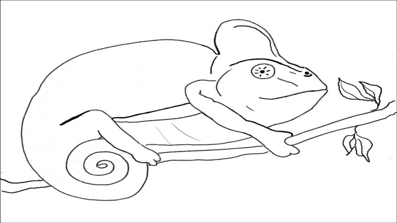 Mixed Up Chameleon Coloring Pages Page Lizard Sketch