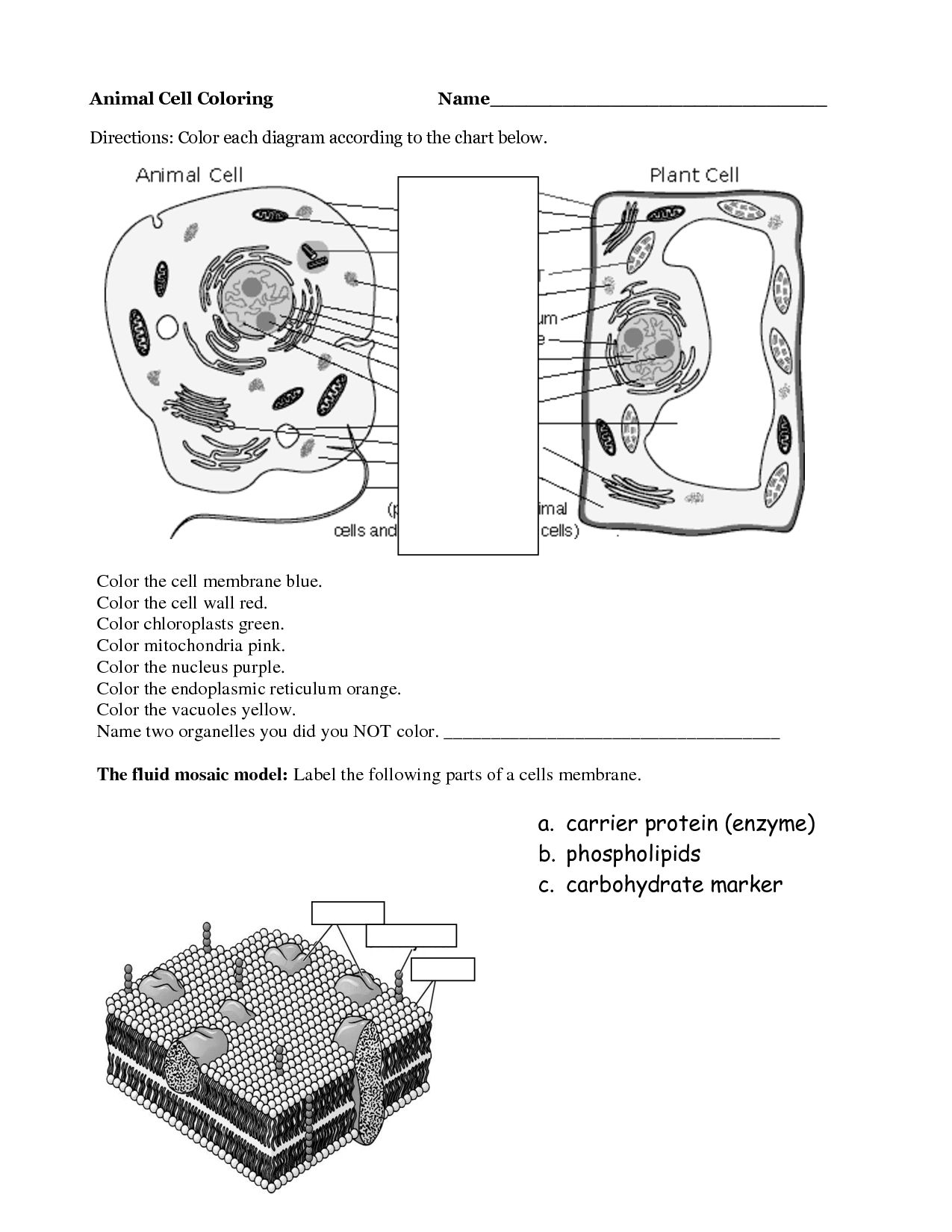 animal cell coloring diagram how to create process flow page az pages