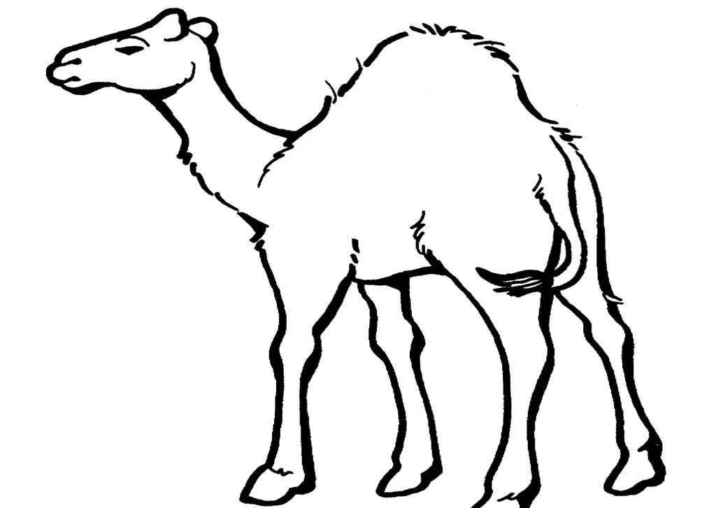 Desert Life Coloring Page Coloring Pages