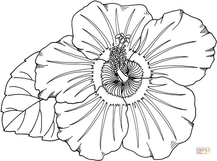 Hibiscus Clipart Coloring