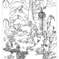 Taiga Food Web Diagram Generator Control Panel Wiring Woodland Animal Coloring Page - Home