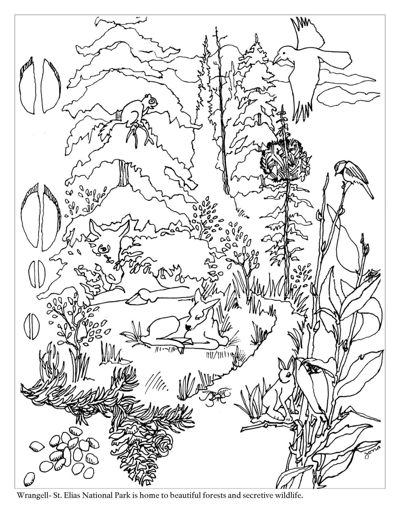 deciduous forest layers diagram water phase change worksheet woodland animal coloring page home