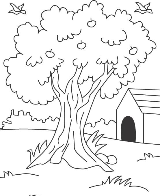 Apple Tree Coloring Page Realistic Coloring Pages