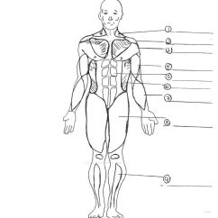 Human Skeleton Diagram Without Labels Front Lighting Circuit Wiring Muscular System Coloring Pages - Home