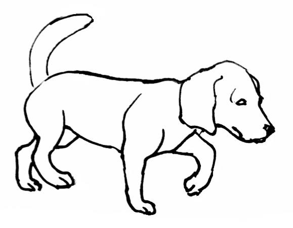 Dachshund Coloring Pages Realistic Coloring Pages