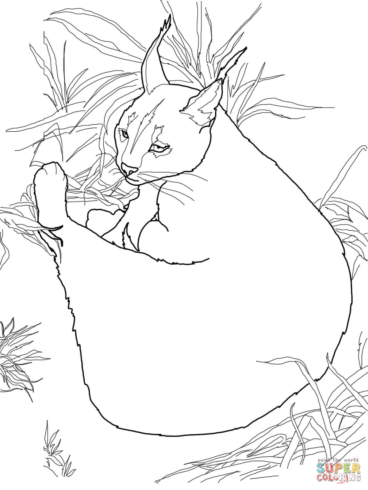 Cat Coloring Pete Baby Pages