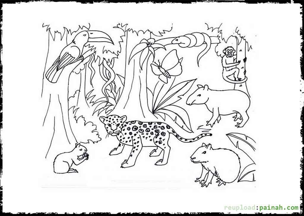 Temperate Rainforest Coloring Pages Coloring Pages