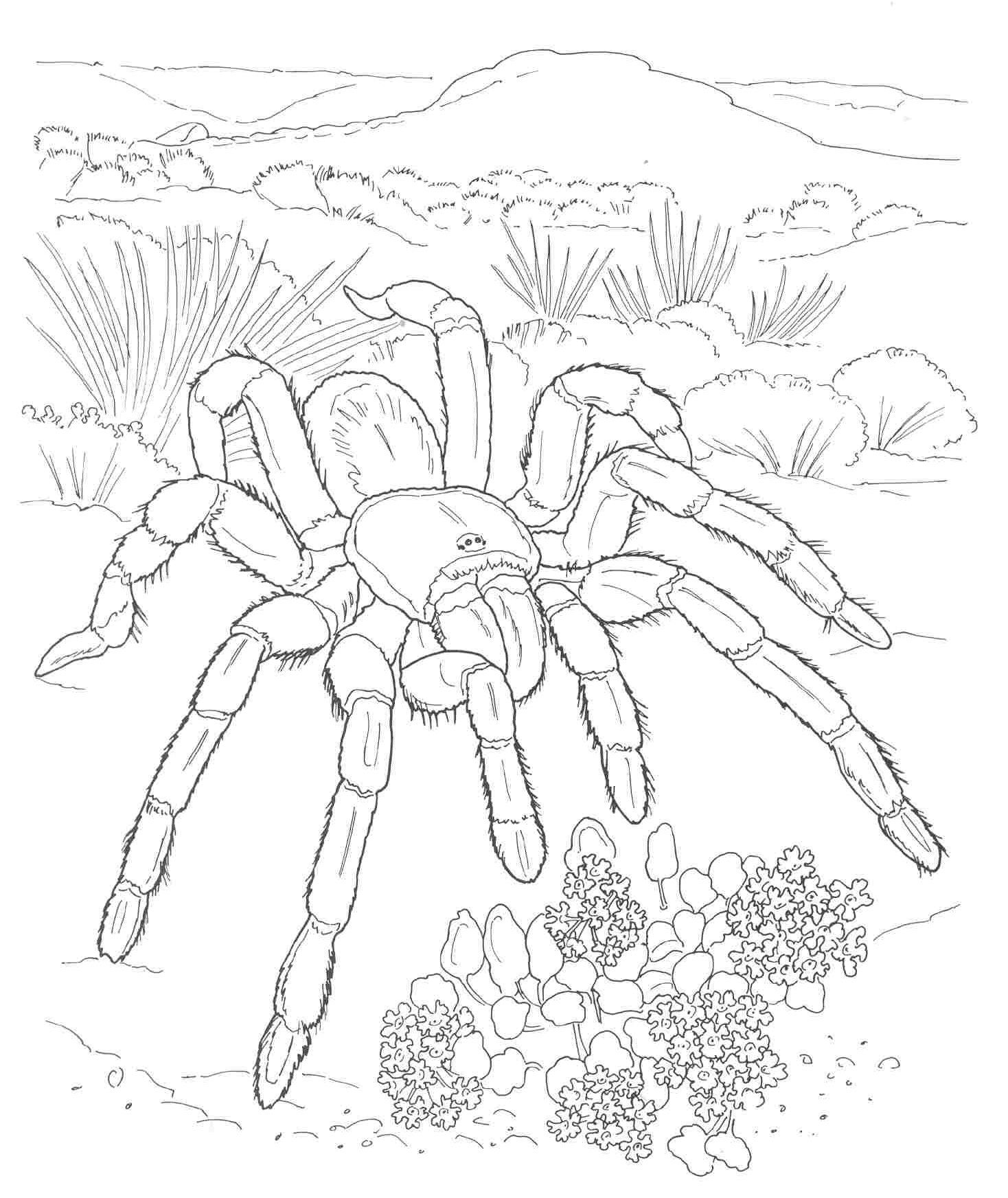 Free Printable Desert Coloring Pages Sketch Coloring Page