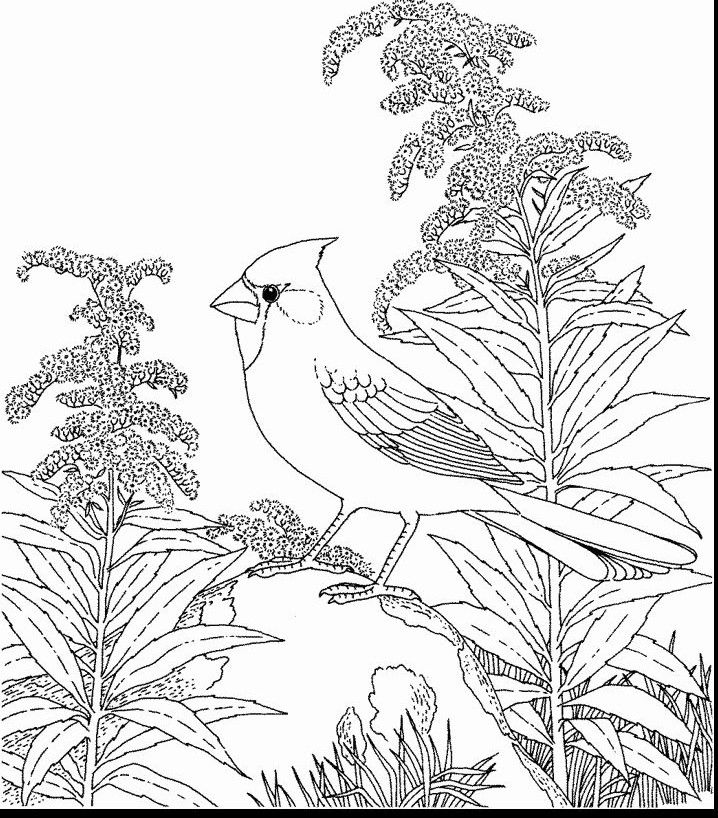 Ohio State Bird Coloring Page