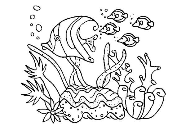 Colored Coral Coloring Pages Community Reef