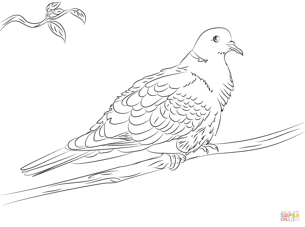 Turtle Doves Coloring Pages Coloring Home