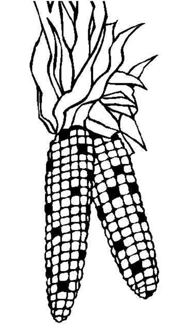 Indian Corn Coloring Pages