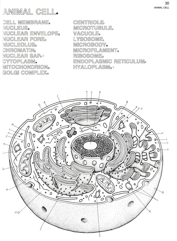 pics photos plant cell diagram labeled image