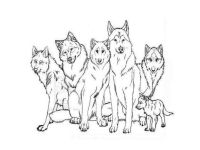 Wolf Pack Coloring Pages - Coloring Home