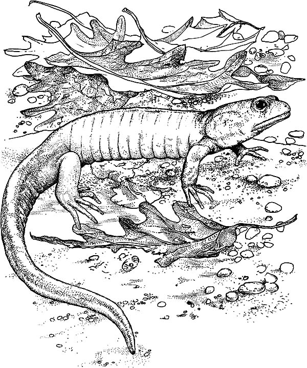 Camo Pages Coloring Pages