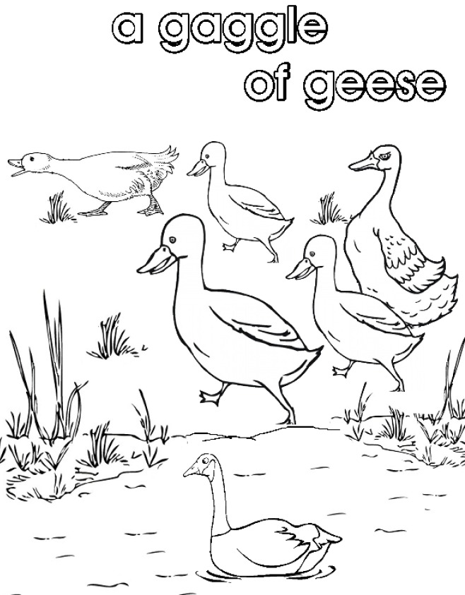Collective Nouns Coloring Coloring Pages