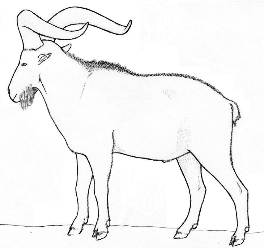 Dairy Goat Coloring Pages Coloring Pages