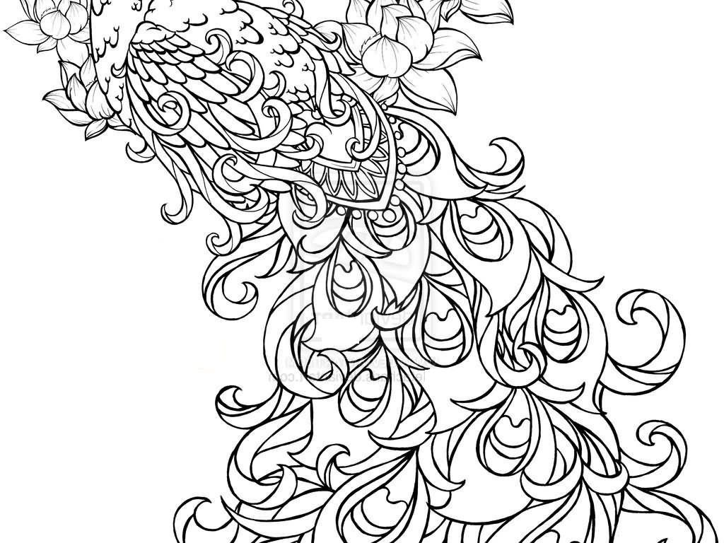 peacock coloring pages adults