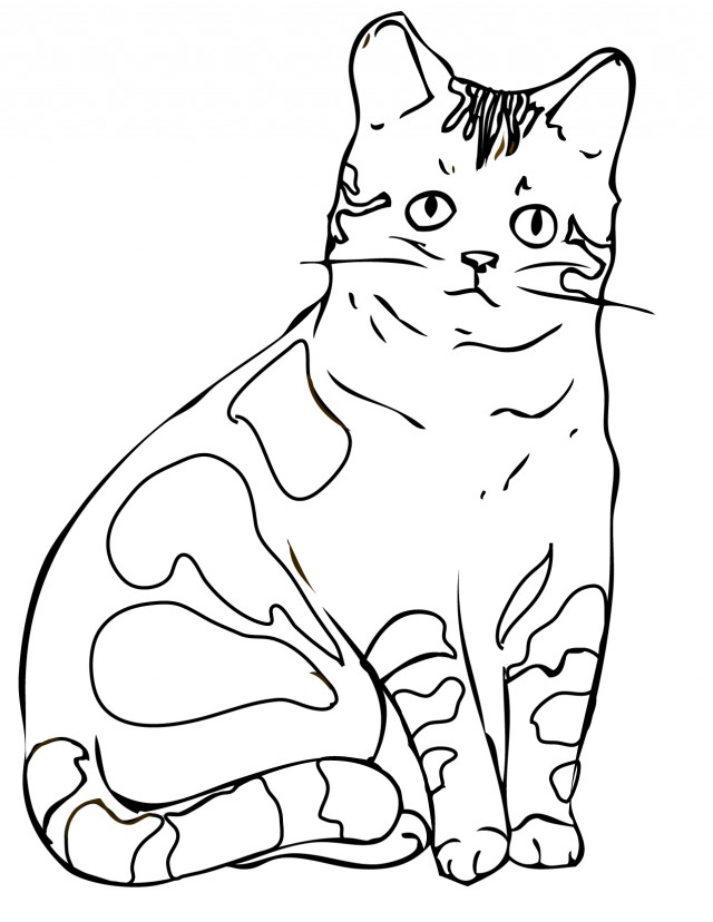 Realistic Cat Coloring Pages To Print