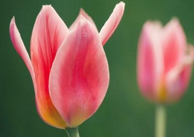 Retiro de Transformação – 31 Março