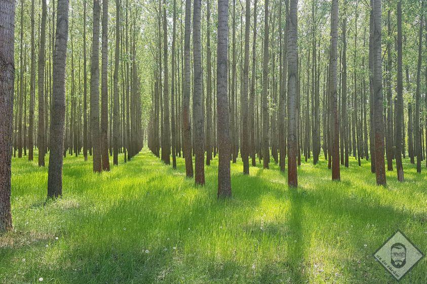 KÉP / Egy újabb telepített erdő