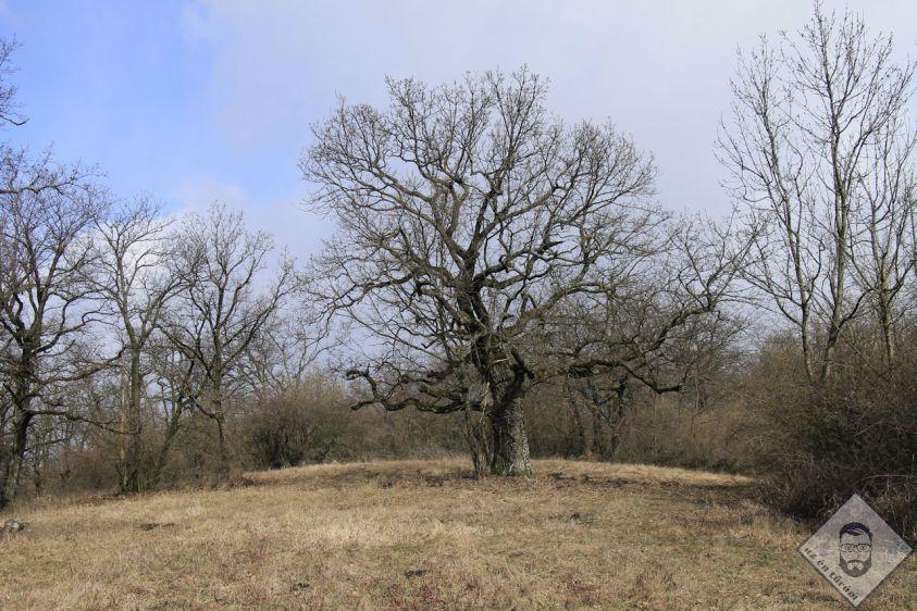KÉP / Magányos fa a Fekete-sár mellett