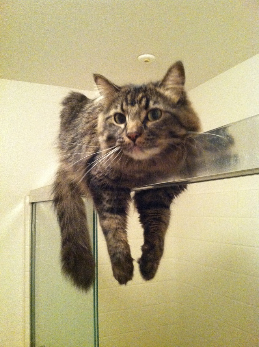 Image result for cats and showers