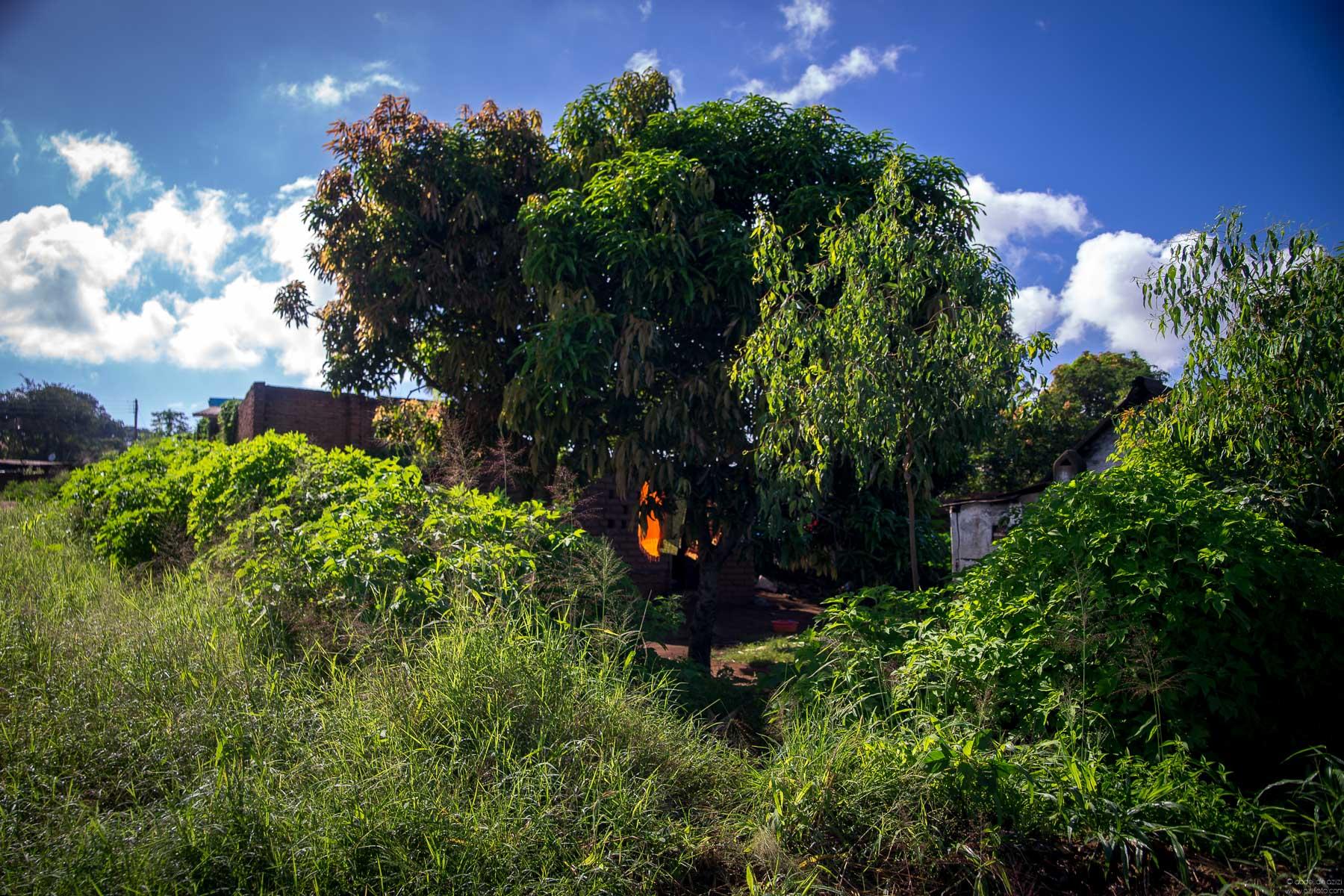 Blantyre malawi