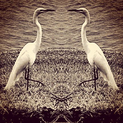 Edited photo of an egret.